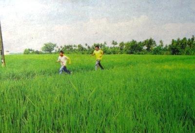 Green View: Latar Expressway takes you past the refreshing padi fields of Sekinchan