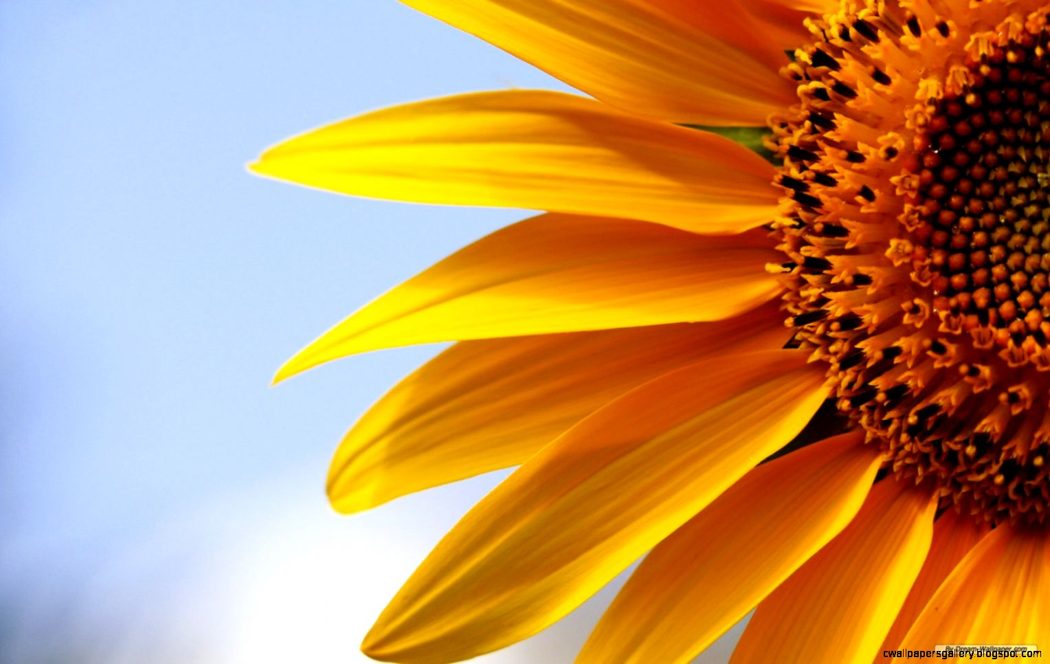 Free Sunflower Desktop Wallpaper   WallpaperSafari