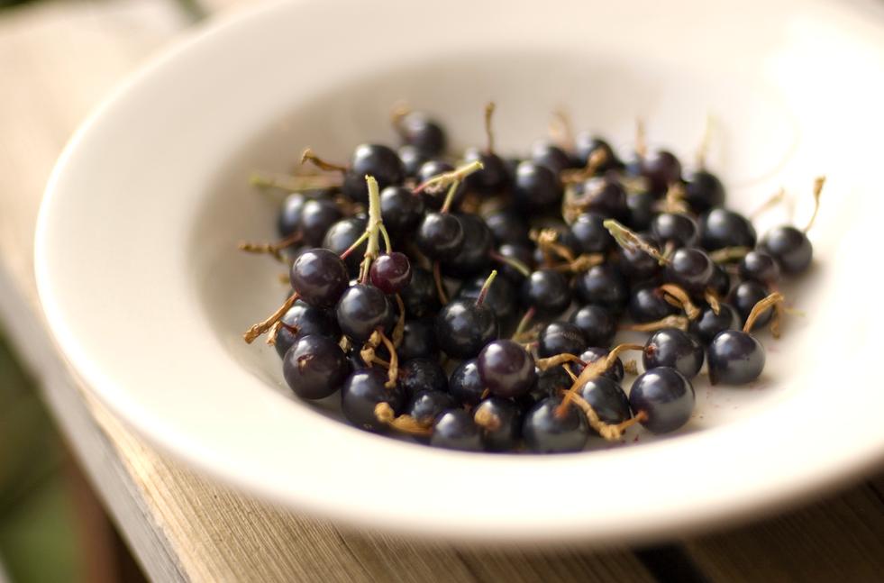 Blend Black Ribes