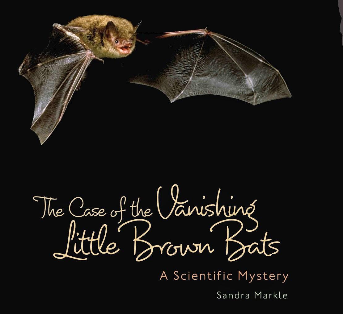 VANISHING BATS