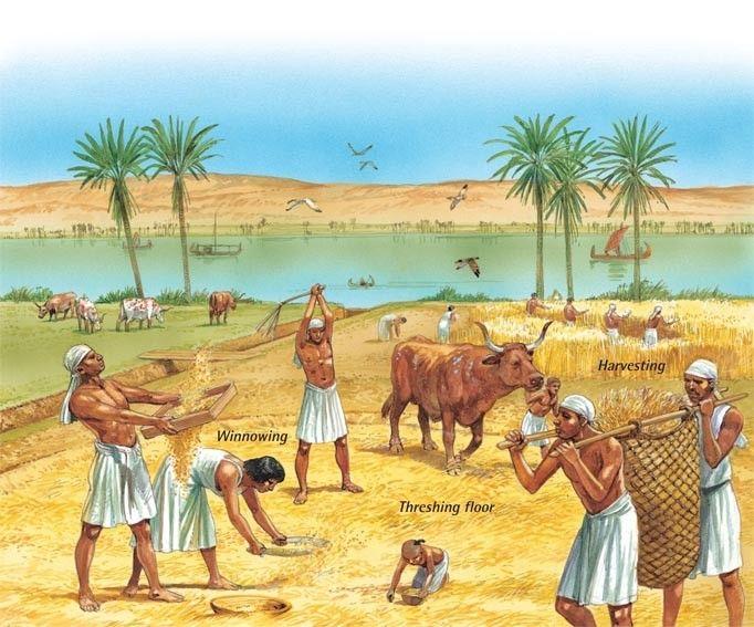 Egyptian Farmer