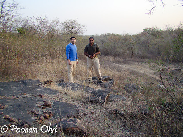 Panna National Park  Panna National Park is situated in the central Indian state of Madhya Pradesh, at a distance of around 57 km from Khajuraho. It was created in 1981 and was declared a Project Tiger Reserve by Government of India in 1994.The region, famous for its diamond industry, is also home to some of the best wildlife species in India and is one of the most famous Tiger Reserves in the country. The park is known worldwide for its wild cats, including tigers as well as deer and antelope. Due to its closeness to one of the best-known Indian tourist attraction in India, Khajuraho, the park is recognized as an exciting stop-over destination.Tiger sighting is always a matter of chance but regular sightings of animals like Leopard, Wolf and Gharial. Herds of Blue Bulls, Chinkaras and Sambars are a common sight. The park can probably boast of the highest density of the Paradise Fly-Catchers. This rich avian and faunal life combined with its picturesque scenery make a visit to the Park memorable.The avifauna comprises more than 200 species, including a host of migratory birds. One can see white necked stork, bareheaded goose, honey Buuzzard, King vulture, Blossom headed Parakeet, Paradise flycatcher, Slaty headed Scimitar babbler to name a few.Till few years back, Panna Wildlife Sanctuary was popular by the name of Panna Tiger Reserve and attracted wildlife lovers from all over the world. But with the disappearance of Tiger population from Panna National Park, it becomes is struggling to maintain its identity. But now authorities of Panna National Park have made up their mind to promote it as a National Park having rare species of Vultures. So picture of Vulture/s give a new face to Panna National Park. Presence of 6 rare species of vultures in Panna forest are being promoted to give some reason to wildlife lovers for visiting it. About 1700 Vultures have been counted in Panna National Park.The Ken river , which flows through the Reserve from south to north, is home for Gharial and Mugger, and other aquatic fauna and is one of the least polluted rivers and a tributary of Yamuna. It is one of the sixteen perennial rivers of Madhya Pradesh and is truly the life line of the Reserve. Ken offers some of the most spectacular scenery to the visitor while it meanders for some 55 km through the reserve.Nearby resorts, offer a variety of nature excursions. Morning and evening walks in the lap of nature are truly wonderful experiences.We saw the national Bird in its full beauty. Doing a beautiful dance to woo the Pehen during the rains.And of course we too got drenched in those rains.There are no jeeps provided by the park authorities, so you will have to rent your own jeep for a safari into the park. Mostly the resorts around the park have their own jeeps which can be hired for the Safari. There are two timings for the Safari - Morning and Evening. We experienced both of them and both were equally nice and interesting.Overall, Panna National park is a must visit for nature and animal lovers!