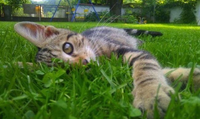 кот редискин: жизнь слишком сложная, что бы быть серьезным