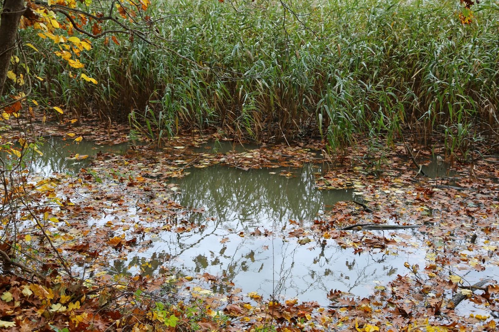 Invasive species essay