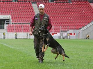 bart-bellon-dog-trainer