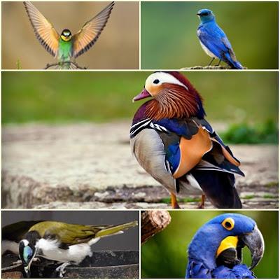 Kuşlar Alemi Teması