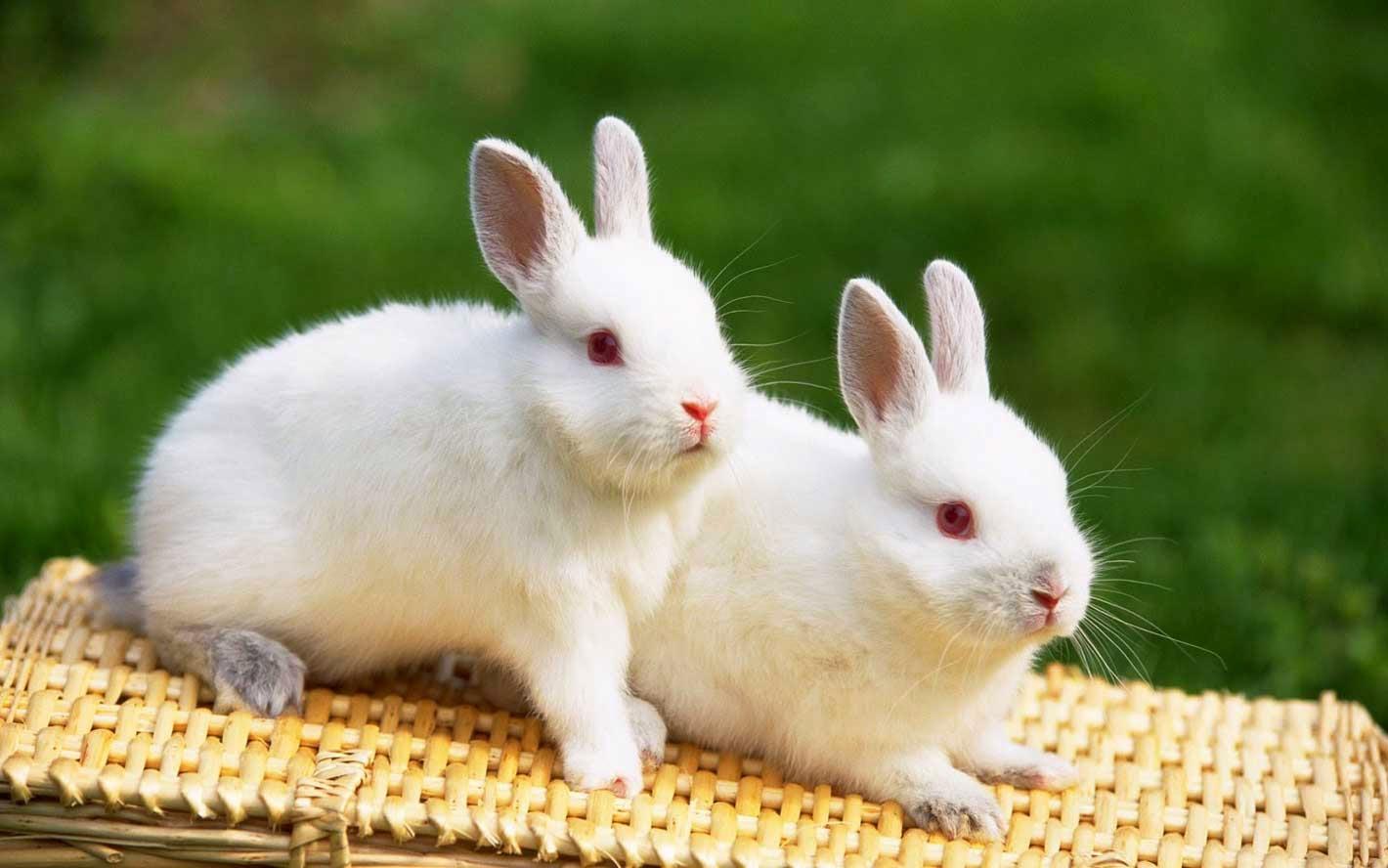 Cute Rabbits Love Wallpaper