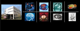 New Perceptions In Art Through Neuroscience Research