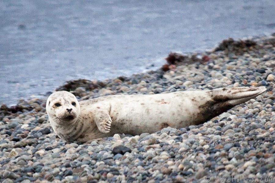 seal harbor christian single men Seal official website view digital booklet /a.