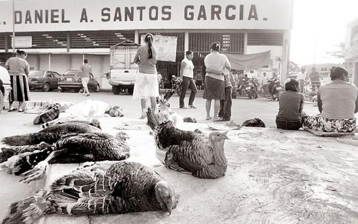 Ofertan pavos criollos en La Chontalpa