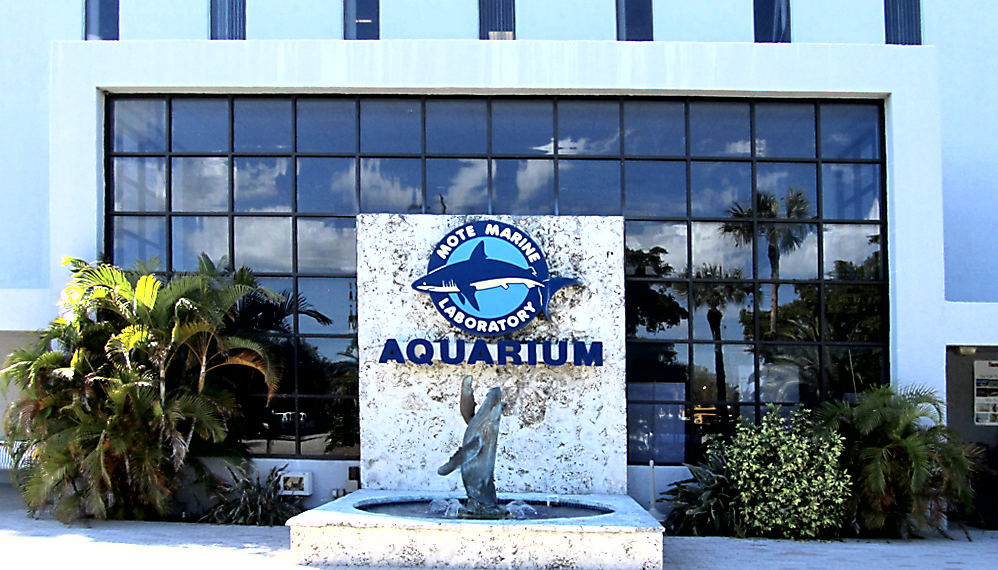 palms americana mote aquarium longboat key