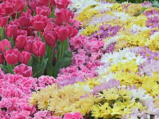 manto de flores preciosas