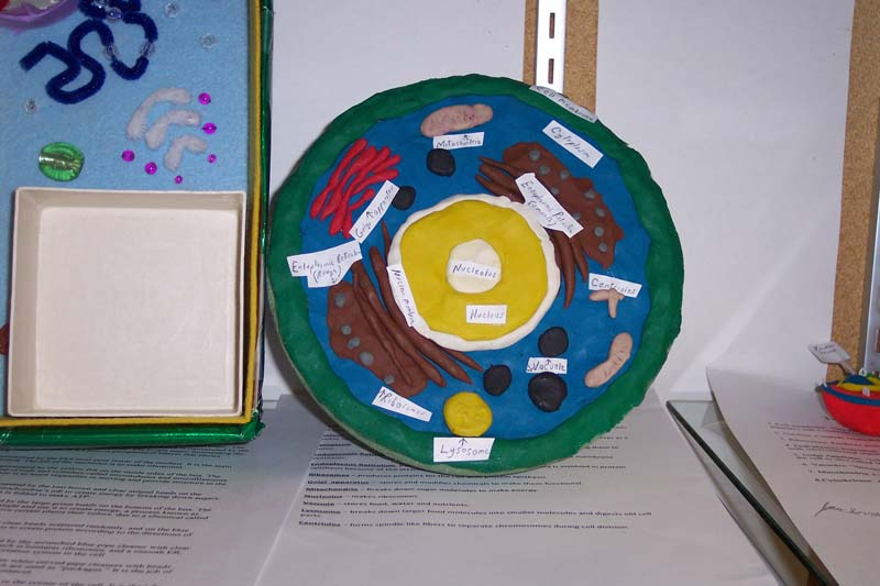 Plant Cell Styrofoam Model http://mrsglaze5th.blogspot.com/2012_10_01_archive.html