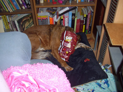 dog suffocating dying chip bag hazard