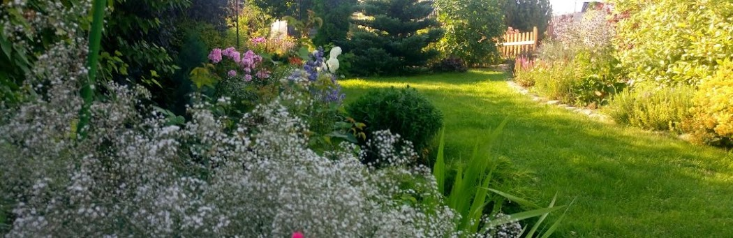 Aleja Kwiatowa - blog ogrodowy, ogrodnik, kwiaty