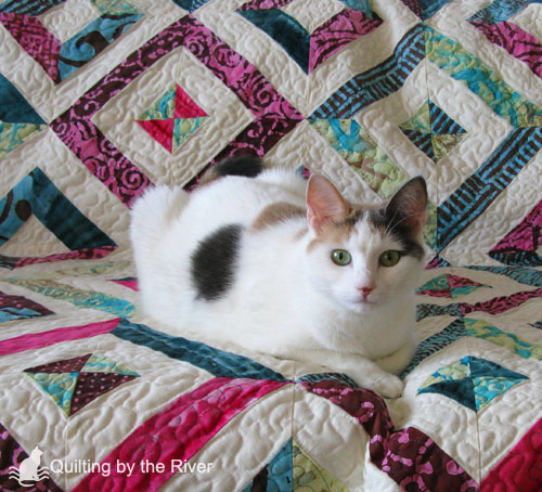 Bella on a quilt