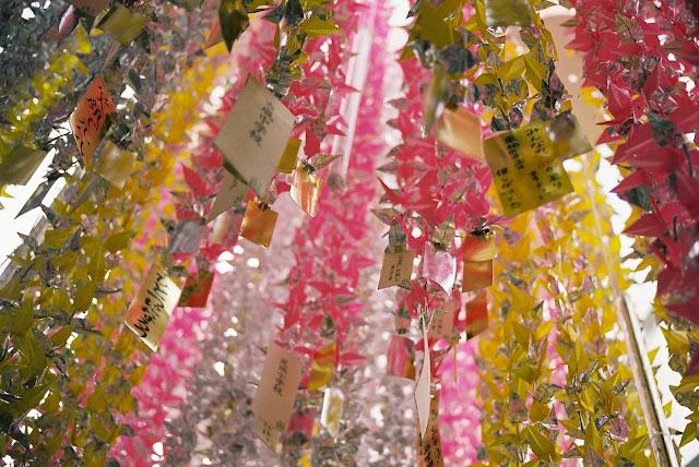 under the tanabata decoration by fujisaki