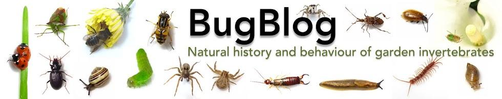 BugBlog