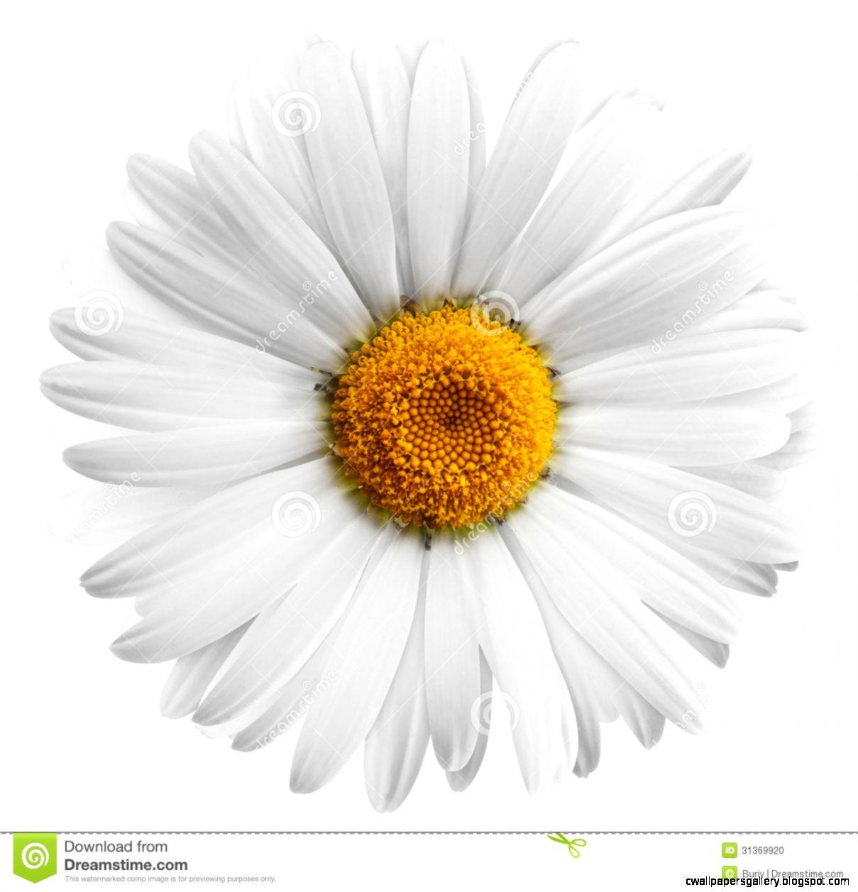 Flower Stock Photo   Image 31369920