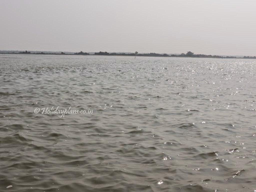 satpada dolphin sanctuary