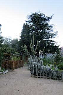Big Sur Bakery cactus garden