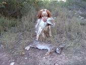 """""""BLANCA"""" (mi perra de caza)"""