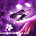Chord Butterfly - Chirstina perri   Memori Kasih