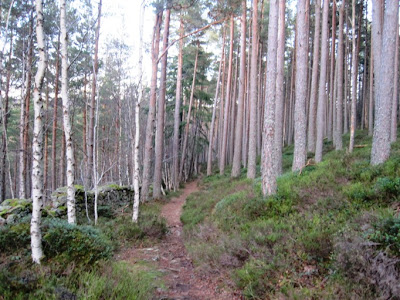 The route around Craigendarroch, Deeside