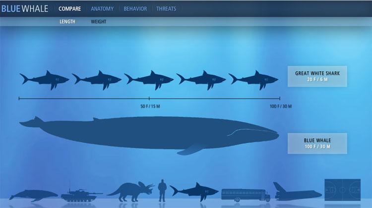 Blog de los niños: Ballenas y delfines