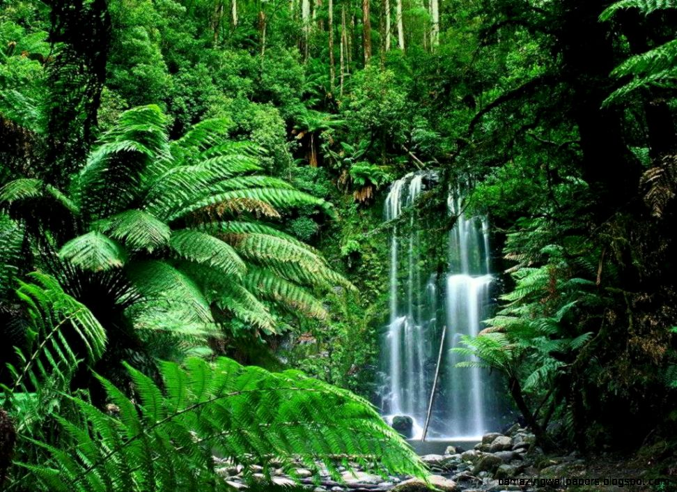 View Original Size Tropical Rainforest Wallpapers Wallpaper Cave