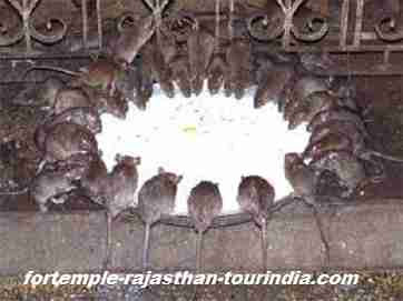 karnimata temple deshnoke Bikaner image,photo,wallpaper