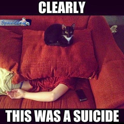 funny pets cats humor
