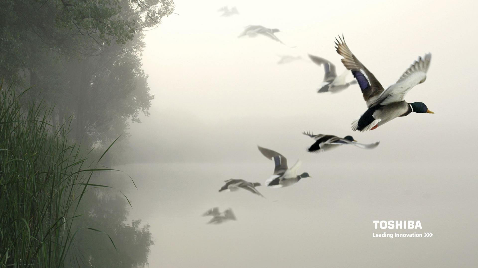 http://3.bp.blogspot.com/-FhFBX7n2SFs/UGra6wOomKI/AAAAAAAALHU/Spgd6DyGVGE/s0/Toshiba-birds-in-the-air-1080x1920.jpg