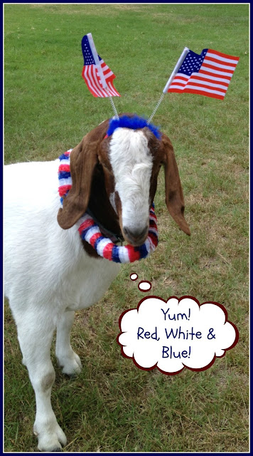 Gus the Goat, Fourth of July, July 4th, Independence Day