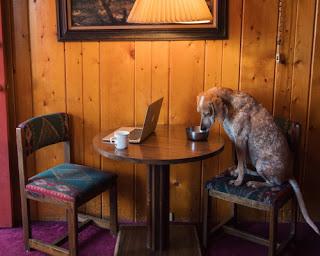 Green Pear Diaries, fotografía, blogs, Theron Humphrey, Maddie on Things