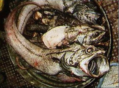 Most Disgusting Fishes pictures