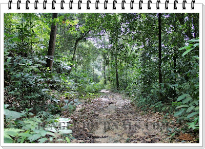 Monsoon Jungle Camping Log ~ Clear Jungle Trail