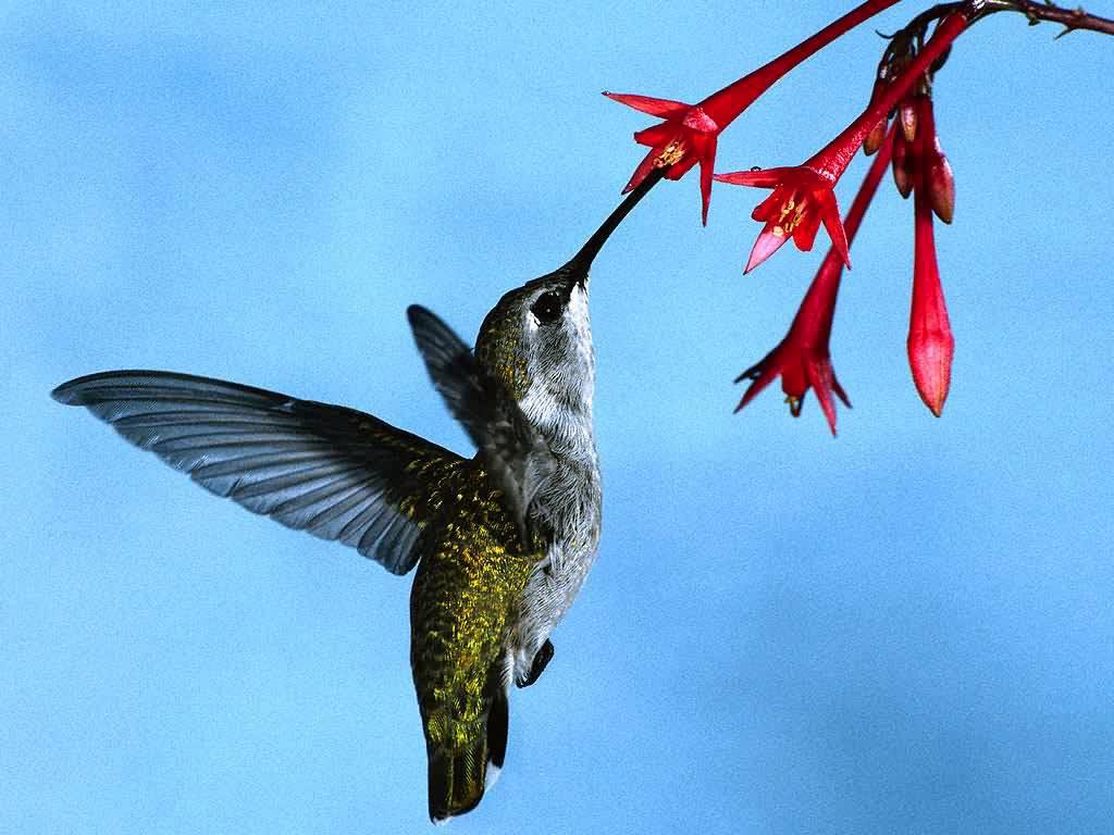 Pics of hummingbird tattoos