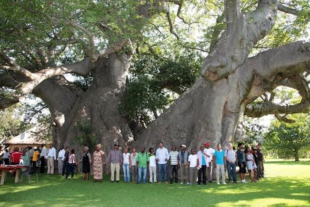Sunland Baobab - Un bar dentro de un árbol ahuecado