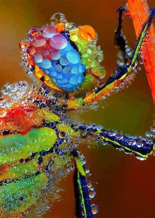 صور حشرات مغطاة بقطرات الندى .. سبحان الله. BH-_0KgCMAATrEE