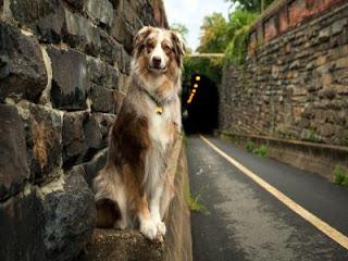 Como enseñar a tu perro donde hacer sus necesidades