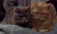 Serenity, a grey chubby tabby, laying next to Bela, an orange thinner tabby, on a light blue blanket