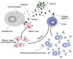 obat hepatitis b yang ampuh secara herbal