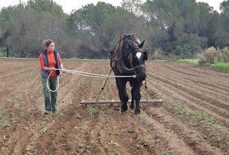 La Kosturica, cooperativa agroecológica