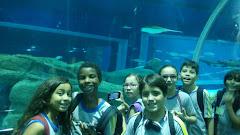 Visita ao Aquario