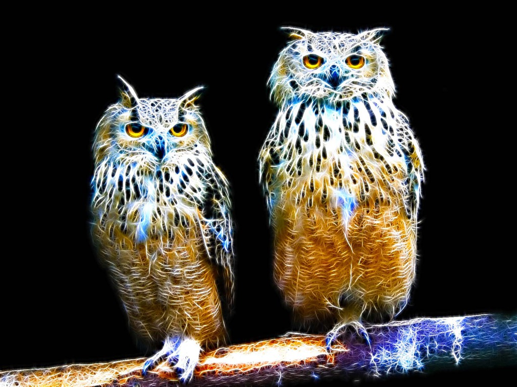 my owl Enhance your social media management with hootsuite, the leading social media dashboard manage multiple networks and profiles and measure your campaign results.