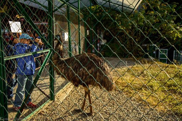 страусы в сочинском дендрарии