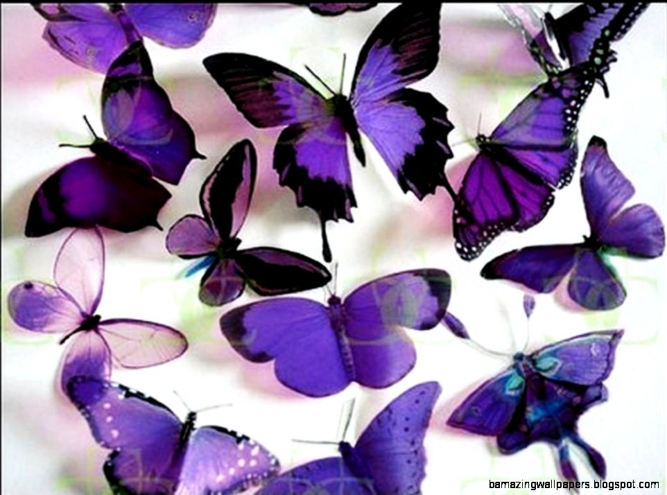 Purple Butterflies   Butterflies Wallpaper 17473487   Fanpop