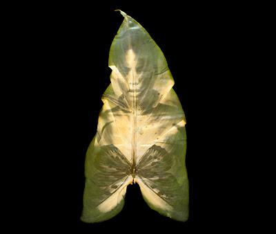 Chlorophyll Printed Art by Binh Danh