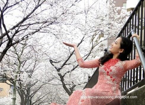 Mc Hồng Phượng ngẩn ngơ trước hoa anh đào Nhật Bản 2